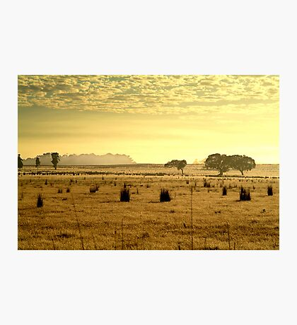 Dry Pasture,Mt Duneed Photographic Print