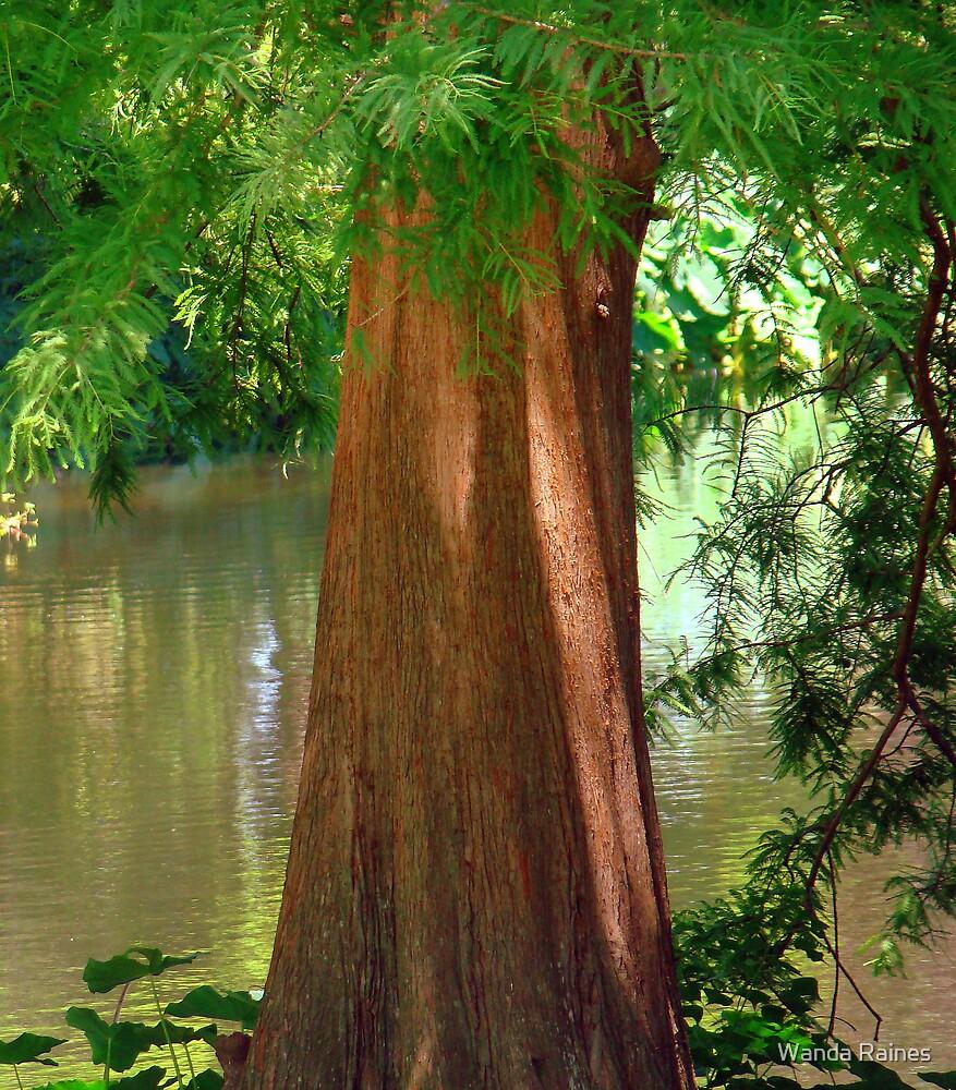 Cypress Tree by Wanda Raines