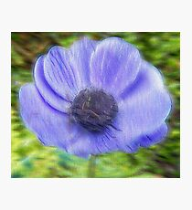 Flower in  Blur Photographic Print