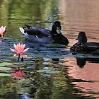 Meeting At The Waterlilies by Heather Friedman