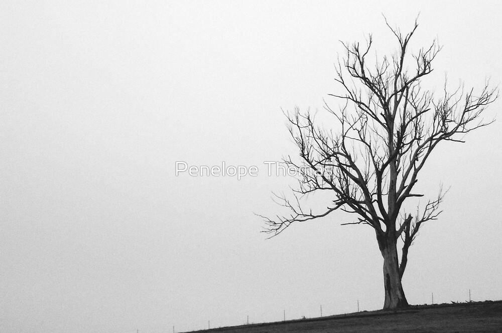 Solitude by Penelope Thomas