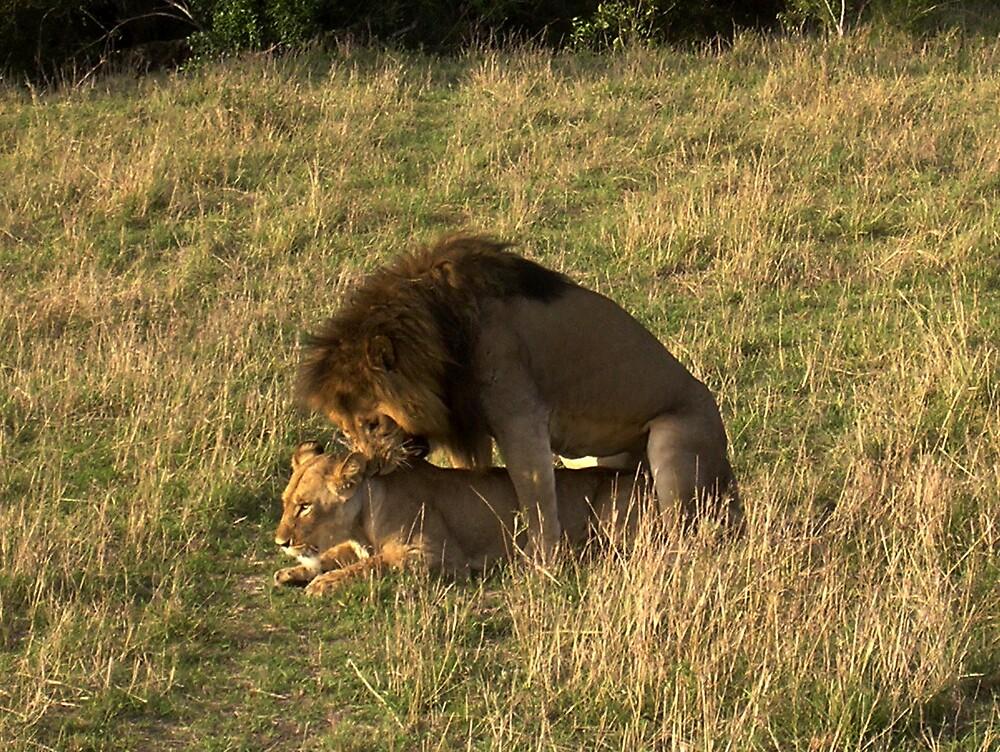 fun in the Masai Mara by Grazia Gargiulo