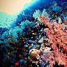 OCEAN COLOUR SCENE by NICK COBURN PHILLIPS
