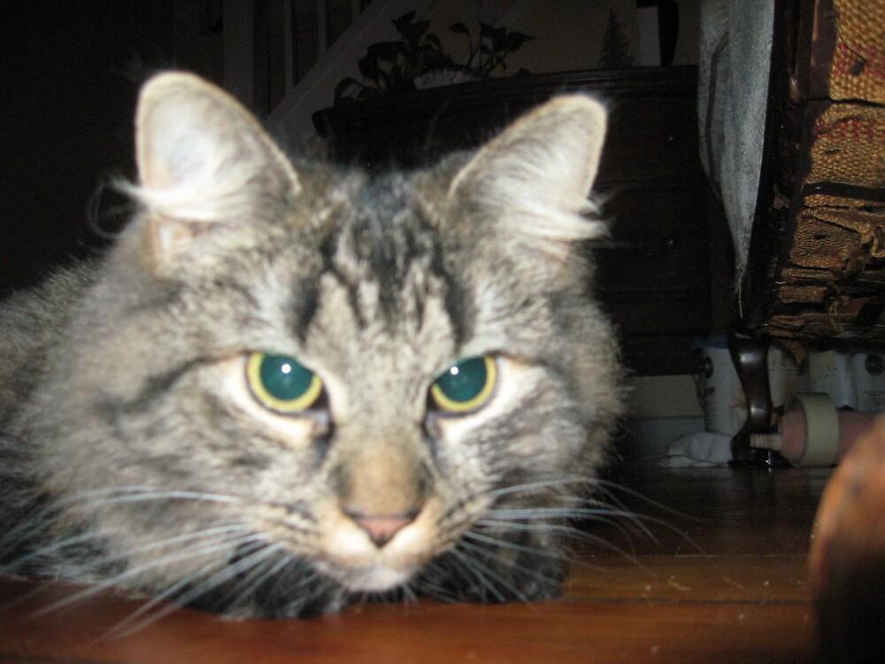 tiger cat by bljaromin