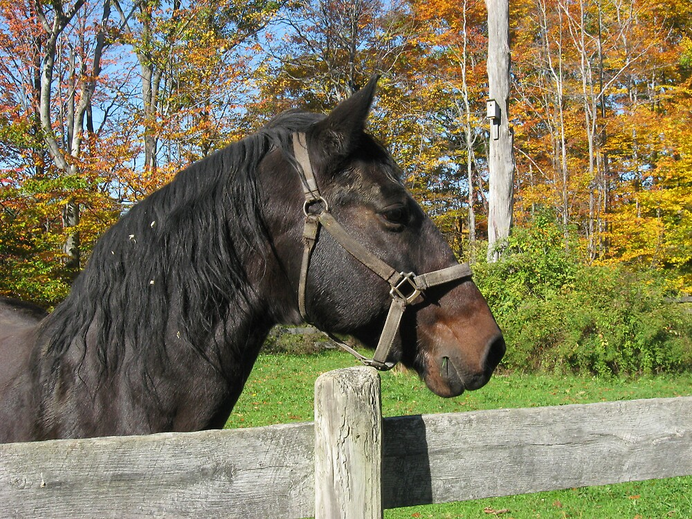 horse in fall by bljaromin