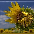 Wallflower by Sheryl Gerhard