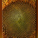 Center of a Sunflower by Sheryl Gerhard