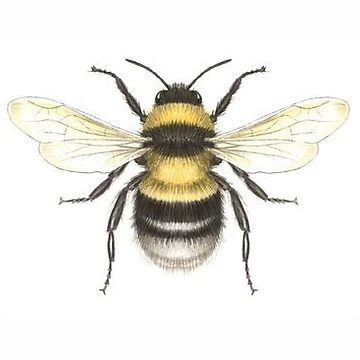 ABEJA de unknownurl