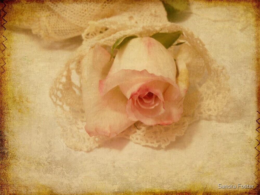 Vintage Rose  by Sandra Foster