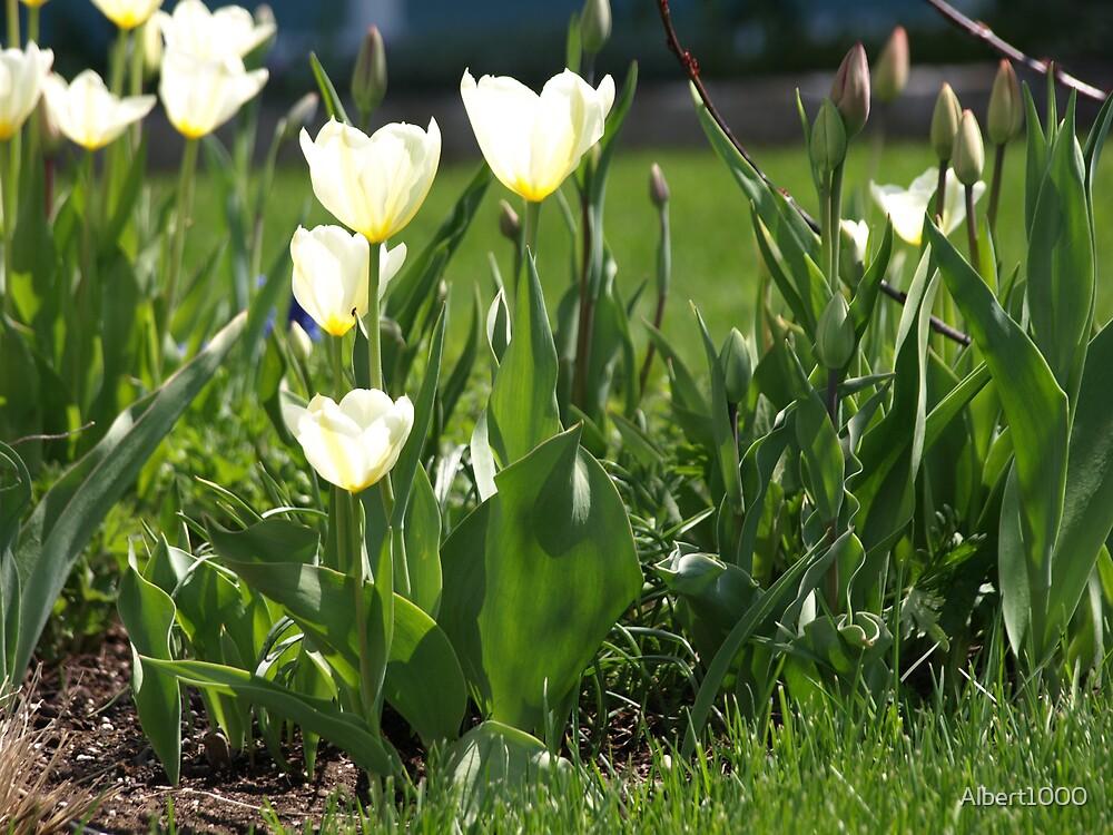 NC spring flowers by Albert1000