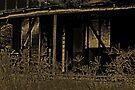 Forgotten In Sepia by Evita