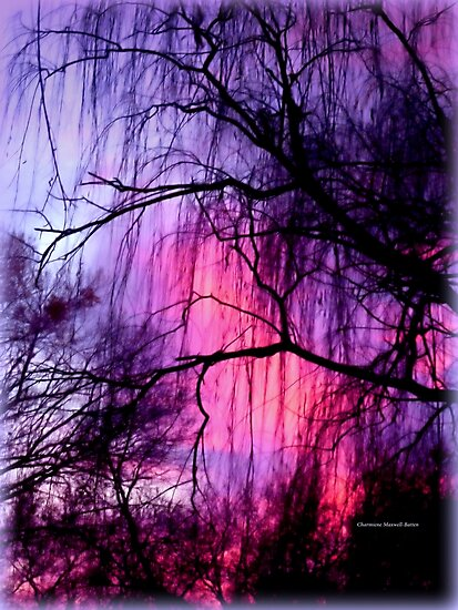Winter Willow by Charmiene Maxwell-Batten