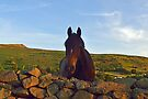 A Horse is A Horse, of Course, of Course. by Michael Haslam