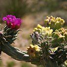 Cactus Flower by lemontree
