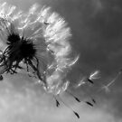 Fly Away in Black and White by melaniedion