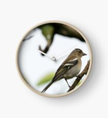 Young Chaffinch Songbird Bird Perching on a Branch - Wales, UK Clock