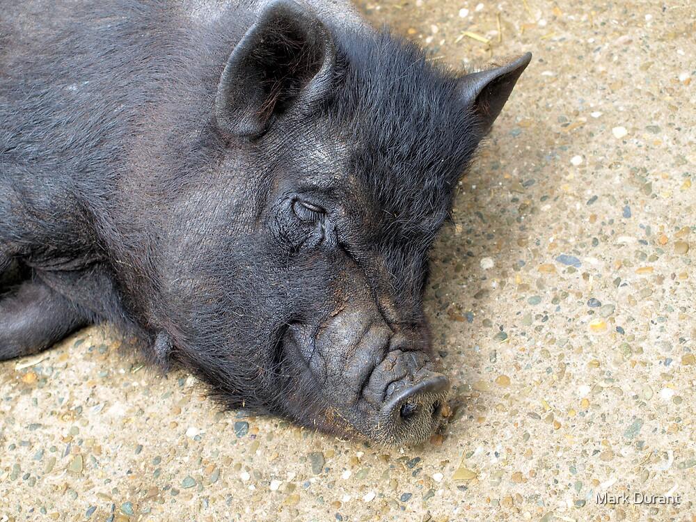Sunbathing porker by Mark Durant