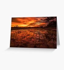 Sunset over rice paddy Greeting Card