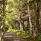 Fundy Trail, New Brunswick by Mark Prior