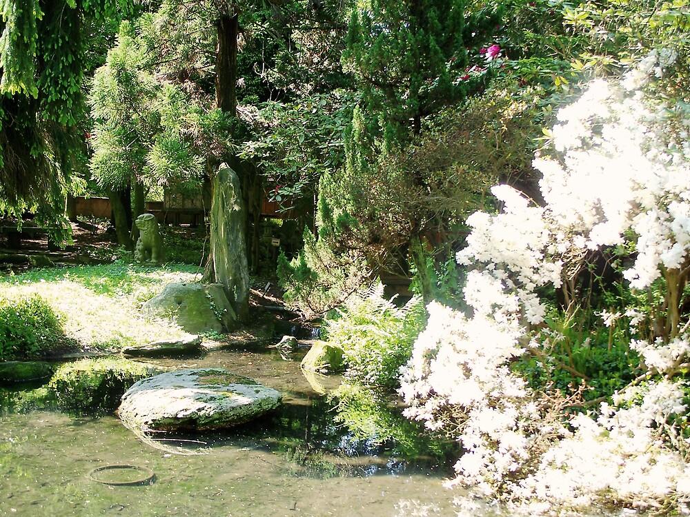 Reflection pond by Judi Taylor