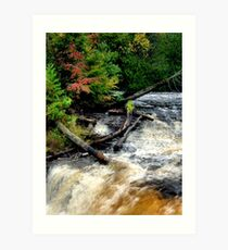 Nature in Perfect Harmony Art Print