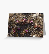 outback wildflowers Greeting Card