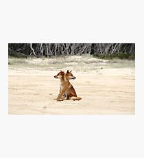 Fraser Island Dingoes Photographic Print