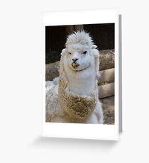 alpaca llama pacos Greeting Card