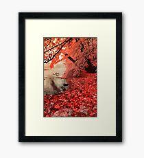 Red Forest River Framed Print