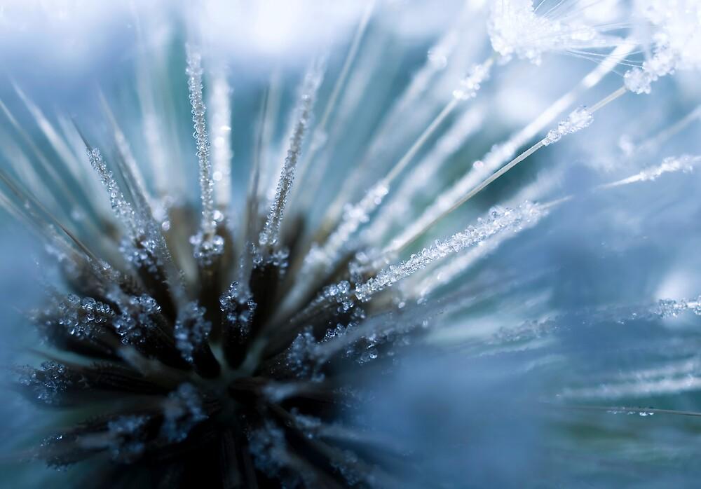 Ice Diamonds by Jenni77