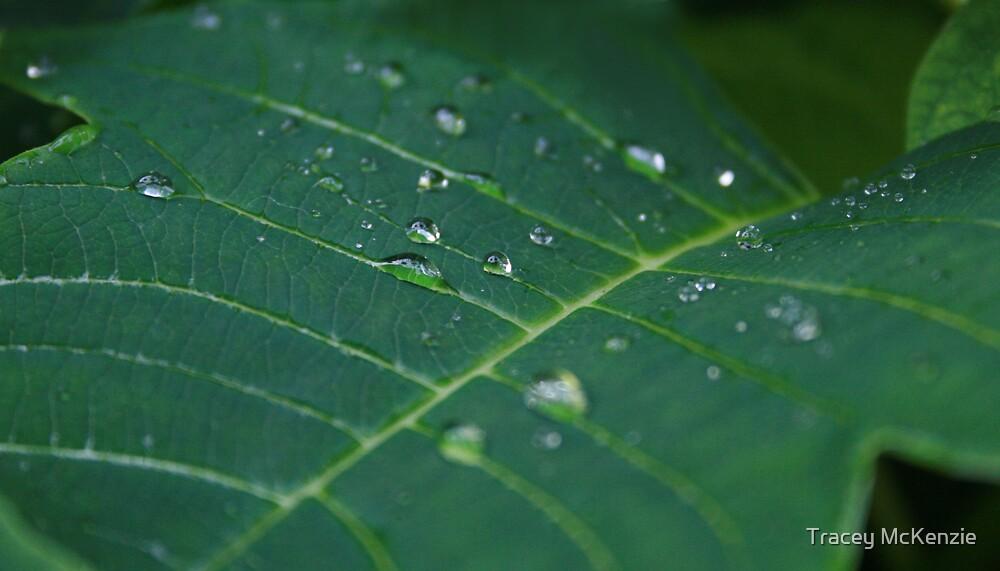 dew drops by Tracey McKenzie
