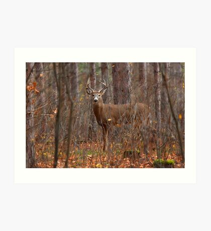 In the Stillness of the Woods - White-tailed Deer Art Print