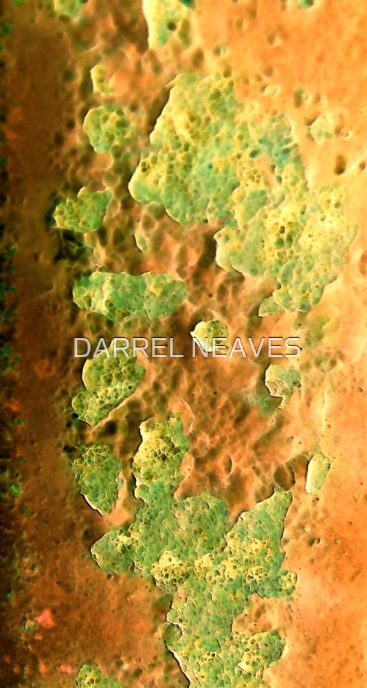rusty orange by DARREL NEAVES