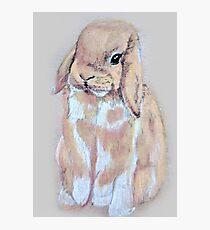 Gizmo the Rabbit Photographic Print