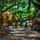 Beneath The Banyan Tree by DJ Florek