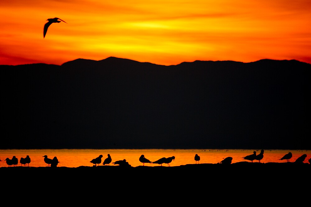 Line of Birds by ryanphotography