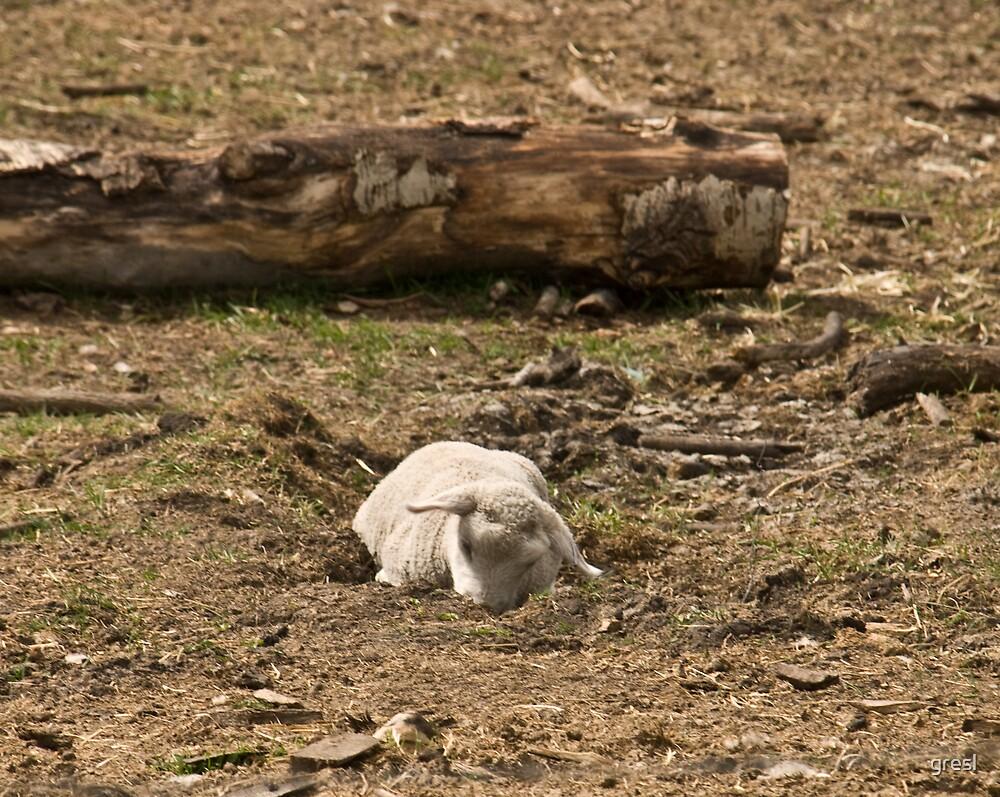 Baby Sheep Sleeping by gresl