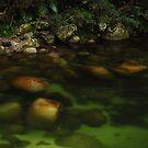 Wet Tropics.....Mossman Gorge by Imi Koetz