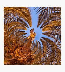 Nîmes' palm tree in the early morning hours Photographic Print