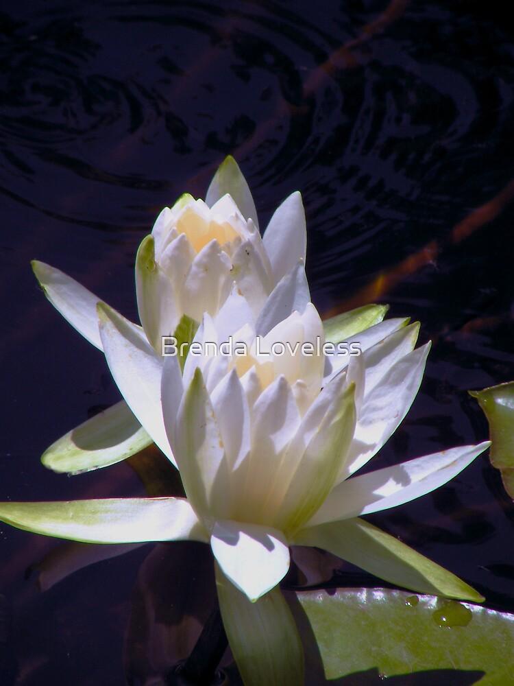 TWU Waterlilies 2 by Brenda Loveless