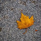 A Leaf in Madrid by Iris MacKenzie