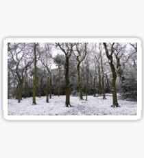 Snow Dusted Naked Trees And Woodland Floor Sticker