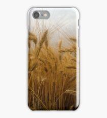 Ripe wheat  iPhone Case/Skin