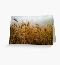 Ripe wheat  Greeting Card