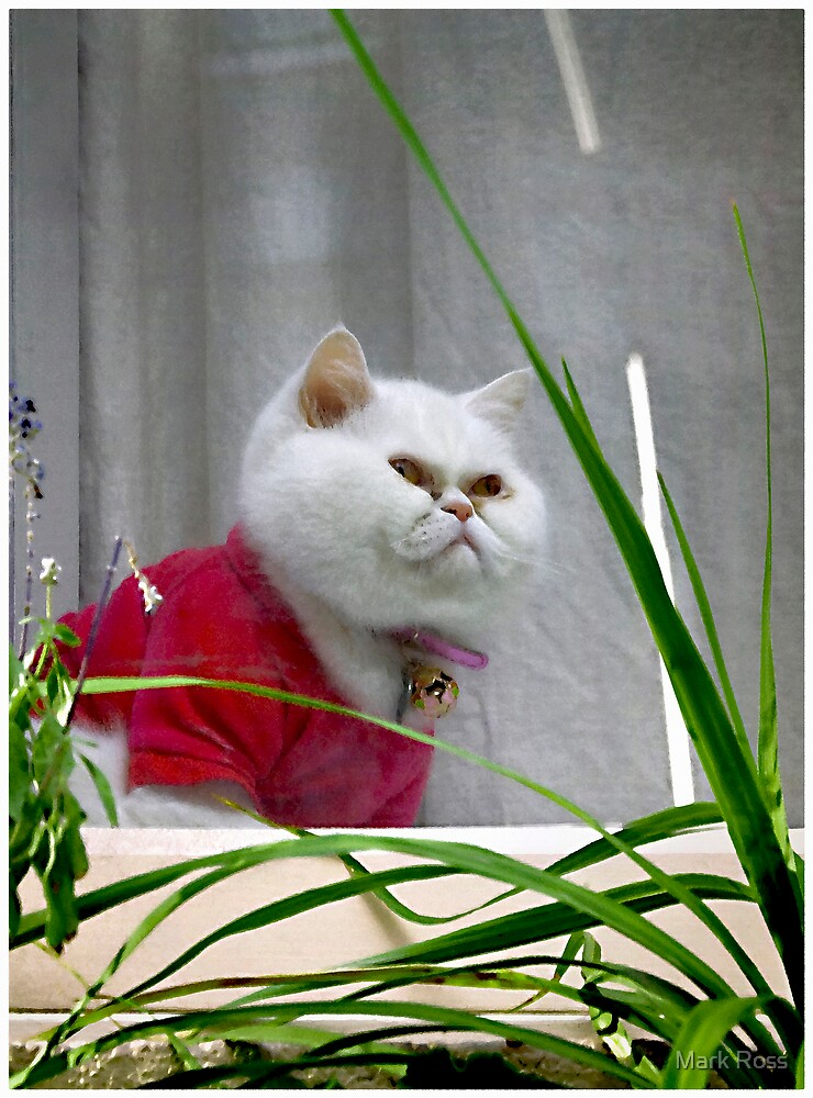 White Cat In A Window by Mark Ross