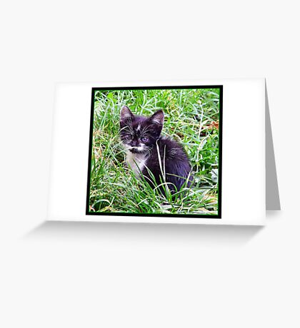 Baby cat Greeting Card