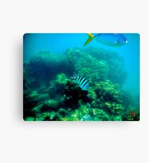Commonly Seen Tropical Fish Canvas Print