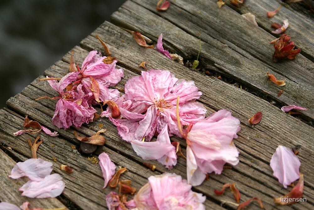 Fallen Petals 2 by lizjensen