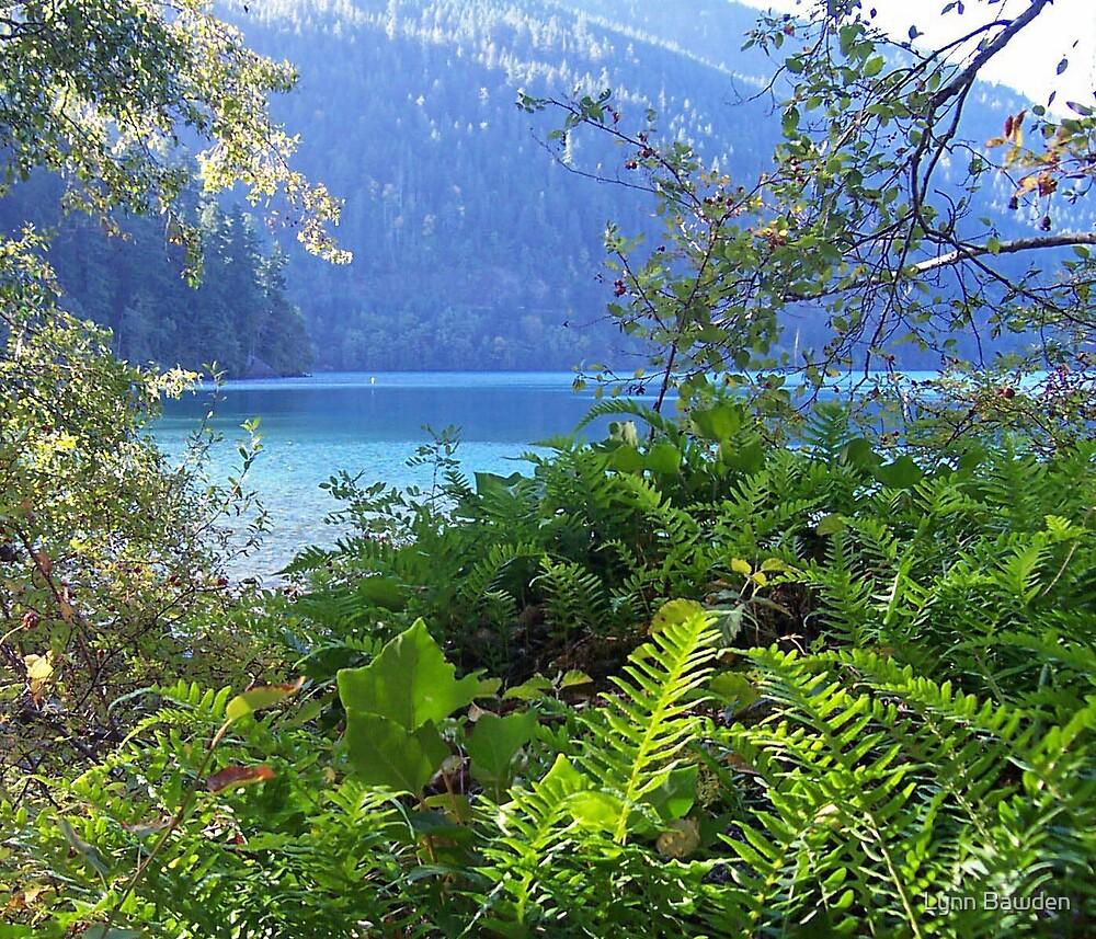 """""""Lake Ferns"""" by Lynn Bawden"""