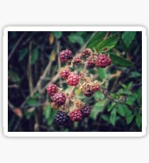 Wild Berries Sticker